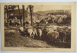 C. P. A. : 25 BESANCON LES BAINS : Un Coin Pittoresque, Moutons, En 1940 - Besancon