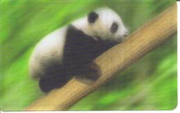 Carte Collector Animée Animaux (Cora / Match) : 6/44  : Panda - Other