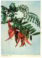 (P 12) New Zealand (older Card) - Kaka Beak (blank At Back Of Card) Flowers - Neuseeland