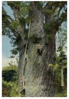 (P 12) New Zealand (older Card) - Giant Kauri Tree - Neuseeland