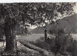LIMONE-BRESCIA-LAGO DI GARDA-OLIVETI A LIMONE-CARTOLINA VERA FOTOGRAFIA- NON VIAGGIATA 1952-1958 - Brescia