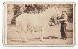 CDV Photo Foto Um 1870 - Keine Angaben Zu Fotograf U. Ort - Mann Präsentiert Ein Pferd, Schimmel, Vermutlich Irland - Old (before 1900)