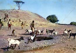 CPA - COTE FRANCAISE DES SOMALIS  - PUITS EN PAYS AFAR - CHEVRES - ANIMATION - CL.24-23 - Somalia
