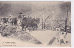 15 MANDAILLES  Sur La Route Attelage De Boeufs Avec Paysans Dans Les  Charettes ,chien Devant Sur La Route Circulée 1904 - France