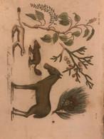Antica Stampa Settecentesca Acquarellata Rappresentante Animali E Vegetali '700 Litografia - Autres
