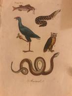 Antica Stampa Settecentesca Acquarellata Rappresentante Animali '700 Litografia - Autres