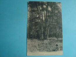 51 - LA NEUVILLE - La Forêt - Cepé De Neuf Hêtres - 1915 - Frankrijk