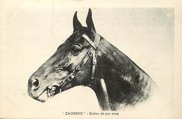 Themes Div-ref FF512- Chevaux -cheval * Zagrens *- Etalon De Pur Sang -vendu Pour La Spa Lyon - Rhone  - - Paarden