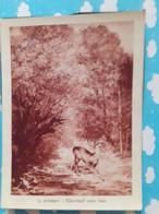 Image Reproduction De Tableau Chevreuil Sous Bois - Autres
