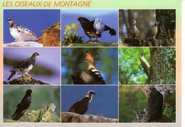CP Oiseaux De Montagne Perdrix Blanche Tetras Lyre Bartavelles Lagopede Huppe Pic Chocart Vautour Aigle Royal Animaux - Vogels