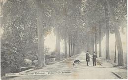 WERCHTER : Steenweg Naar Rotselaar - Chaussée De Rotselaar - Cachet De La Poste 1908 - Rotselaar