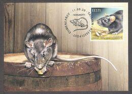 Estonian Fauna – The Black Rat Estonia 2020  Stamp Maxicard  Mi 997 - Estonia