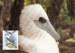 Christmas Island 1990 Maxicard Sc #271 20c Abbott's Booby WWF - Christmas Island