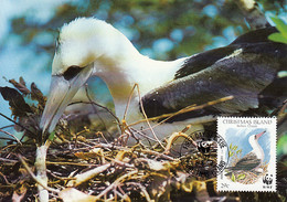 Christmas Island 1990 Maxicard Sc #272 29c Abbott's Booby WWF - Christmas Island