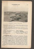1923 AUDRESSELLES CHEMIN DE FER DU NORD A 260 KM DE PARIS WIMILLE WIMEREUX STATION DE LA LIGNE CALAIS - Railway