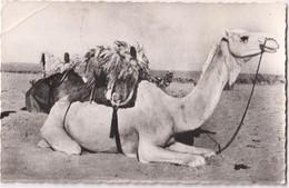 Atar - Le Méhari Blanc - Mauritania
