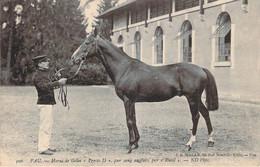 "64 - Pau - Haras De Gélos ""Presto II"" Pur Sang Anglais Par ""Rueil"" (cheval) - Pau"
