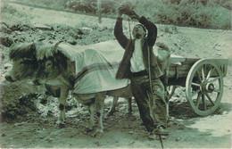 64 - Pays Basque - Le Buveur (attelage De Boeufs) - Francia