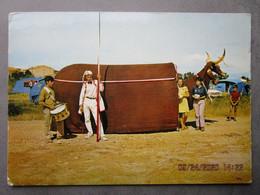 CP 34 MEZE -  Fête Locale 19/21 Aout  - Folklore  LE BOEUF  - Lance De  Joutes Et Tambour , Le Camping 1970 - Mèze