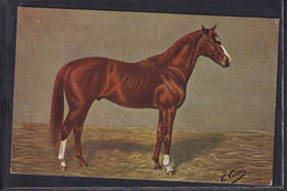 B49 /    Pferde Pferd Rennpferd / K. Volkers , Caius - Pferde