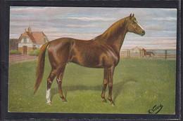 B49 /    Pferde Pferd Rennpferd / K. Volkers , Biniou - Pferde