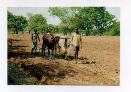CP Utilisée. Pala, Tchad : Agriculteurs Labourant Un Champ Avec Boeufs Attelés. Photo Jo Thevenet. Chad, Africa - Chad
