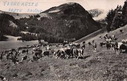 Vacheresse (74) - Troupeaux Dans La Montagne - Vacheresse