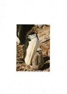 Antarctique British Survey Pingouin - Andere