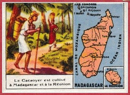 Le Cacaoyer Est Cultivé à Madagascar Et à La Réunion. Chromo Du Ministère Des Colonies Pour Le Cacao. Bon Point N°6. - Non Classificati
