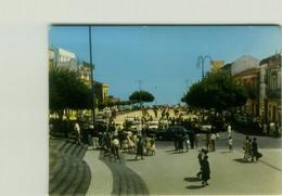 ZAFFERANA ETNEA ( CATANIA ) LA PIAZZA BELVEDERE - EDIZIONE TOMARCHIO - 1960s (BG6248) - Catania