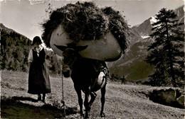 Figures Du Valais: Pendant Les Foins Au Vallon D'Arolla (15825) * 15. 7. 1958 - Phot. Gyger - VS Valais