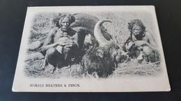 Somali Beaters & Bison - Somalia