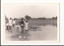 Afrique Photo Touriste Crocodiles - Ohne Zuordnung