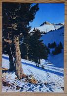 74 : Thollon-les-Memises - A L'arrivée Du Télécabine Le Pic Du Borée Aux Derniers Rayons Du Couchant - (n°18635) - Thollon