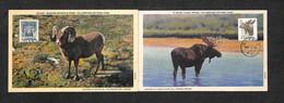 CANADA - 2 Cartes Maximum 1953 - QUÉBEC - YELLOWSTONE NATIONAL PARK - BULL MOOSE - BIGHORN MOUNTAIN SHEEP - Cartoline Maximum