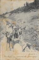 Suisse Valais (Wallis) - Gornergrat - Randa - Heimkehr Von Der Alm (De Retour De L'Alm) Chèvre 1902-09-14 BE - VS Valais