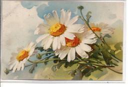 Signée C. KLEIN : Marguerites . Meissner Et Bush - Klein, Catharina