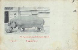 Anvers - 1899 - Zoo - Hippopotame - Antwerpen