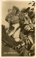 AUSTRALIA  KOALA BEAR + BABY BEAR RP ANIMALS - Other