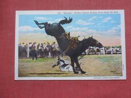 Midnight World's Famous Bucking  Horse   Ref  4392 - Horses