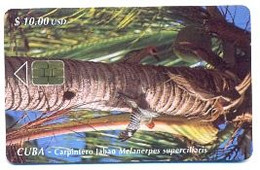 CUBA, Used Chip Phonecard, In Perfect Condition, Carpìntero Jabao..., # Cuba-59 - Cuba
