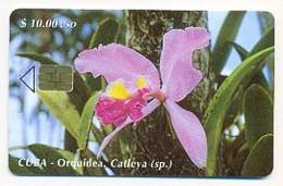 CUBA, Used Chip Phonecard, In Perfect Condition, Orquídea Catleya, # Cuba-74 - Cuba