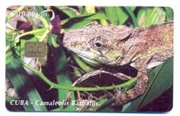 CUBA, Used Chip Phonecard, In Perfect Condition, Camaleolis Barbatus, # Cuba-87 - Cuba