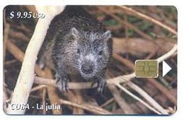 CUBA, Used Chip Phonecard, In Perfect Condition, La Jutía, # Cuba-161 - Cuba