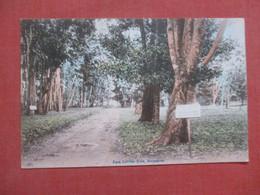 Para Rubber Tree Singapore    Ref  4394 - Singapur