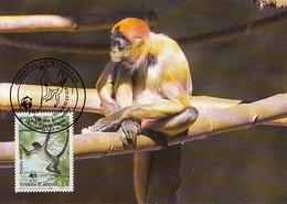 Honduras 1990 Maxicard Sc #C789 10c Geoffroy's Spider Monkey WWF - Honduras