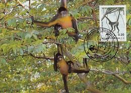 Honduras 1990 Maxicard Sc #C791 20c Geoffroy's Spider Monkey WWF - Honduras