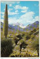 Carte Postale  Amérique  Pérou   Callejon De Huaylas  Très Beau Plan - Peru