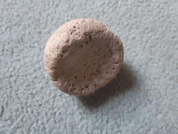 éponge Fossile Du Turonien, Touraine - Fossils