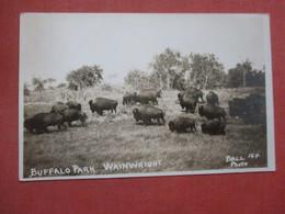RPPC  Buffalo Park Wainwright    Ref  4396 - Animaux & Faune